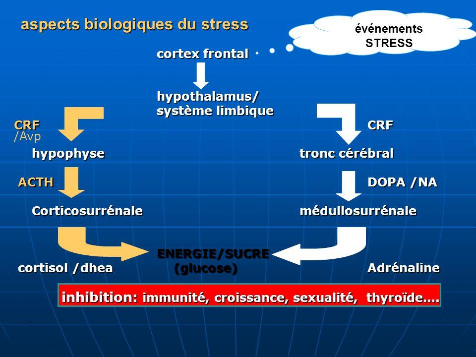 aspects biologiques du stress cortex frontal hypothalamus/ système limbique CRF CRF hypophysetronc cérébral ACTH DOPA /NA ACTH DOPA /NA Corticosurréna