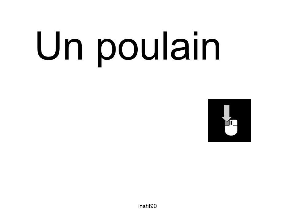 instit90 Un poulain