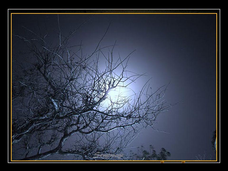 Ce soir, la lune dans l'obscurité Entend roucouler les tourterelles Sur les branches des arbres habillés De toutes les couleurs pastels…