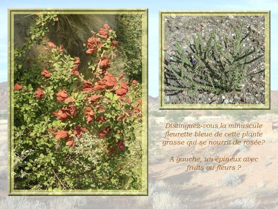 Ci-dessus, la plante mâle. Une plante rare qui, d'après notre guide, se développerait sous terre…
