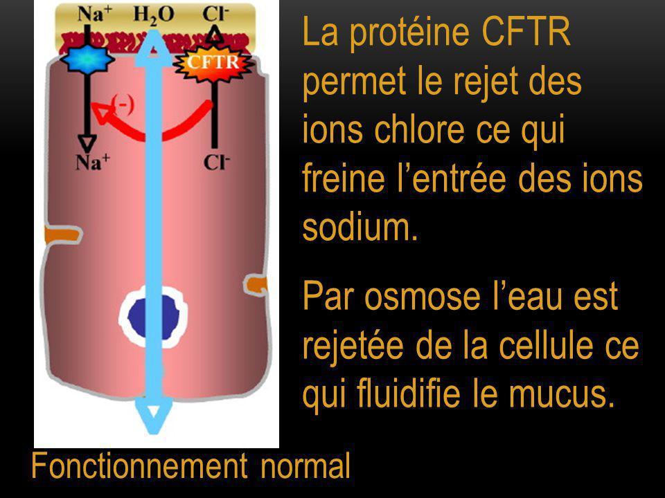 Fonctionnement normal La protéine CFTR permet le rejet des ions chlore ce qui freine l'entrée des ions sodium. Par osmose l'eau est rejetée de la cell