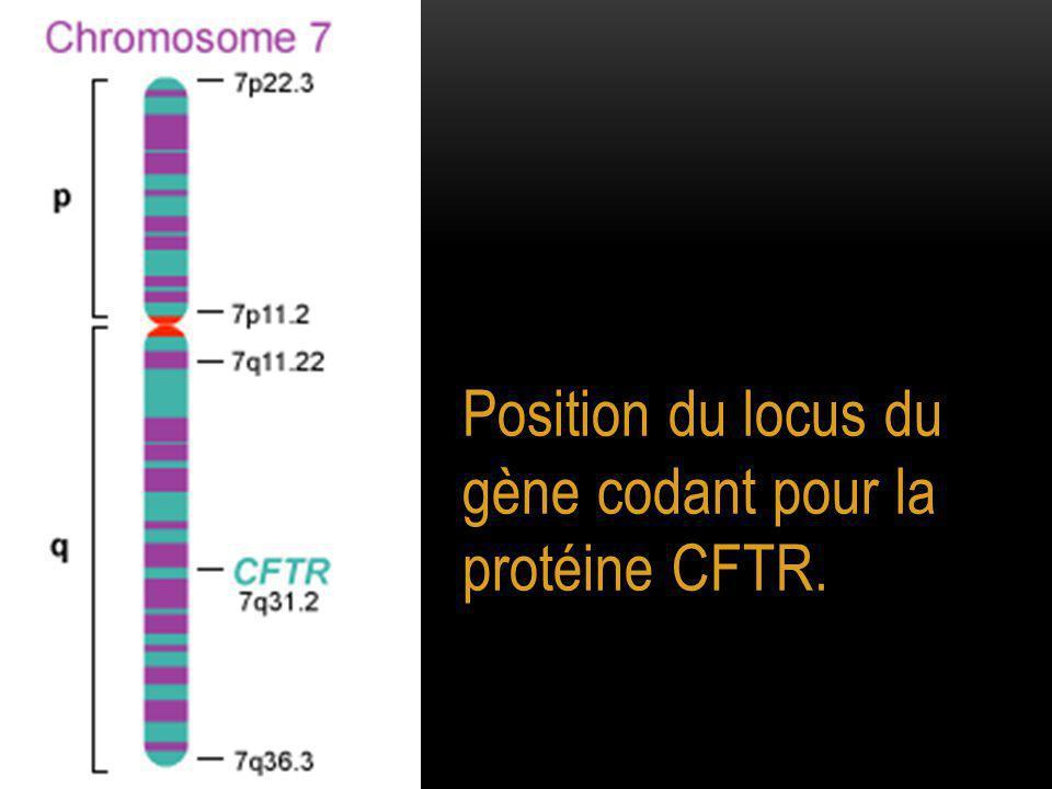 Position du locus du gène codant pour la protéine CFTR.