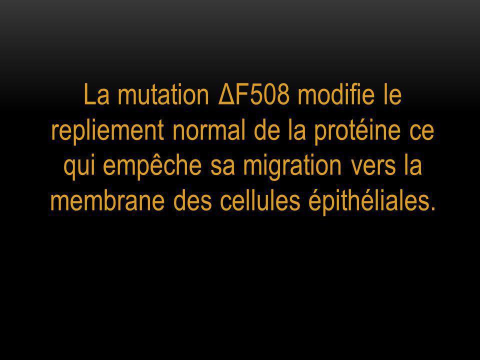 La mutation ΔF508 modifie le repliement normal de la protéine ce qui empêche sa migration vers la membrane des cellules épithéliales.