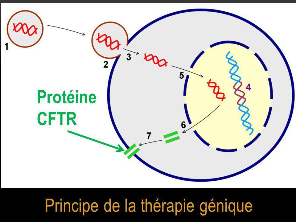 Principe de la thérapie génique Protéine CFTR