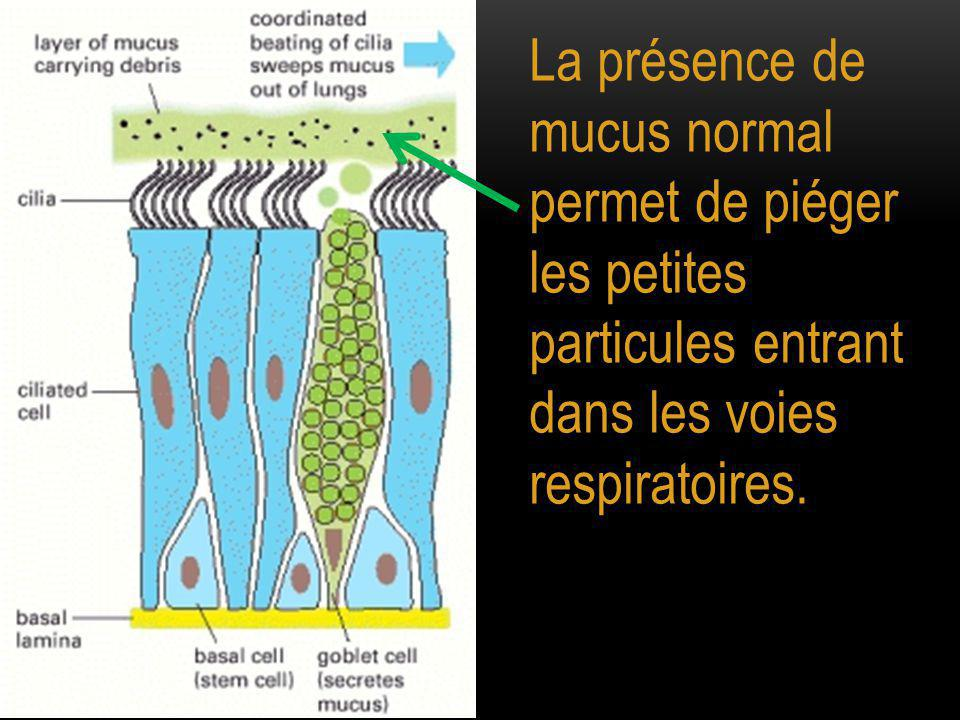 Les mouvements coordonnés des cils permet l'évacuation de ce mucus contenant les petites particules.