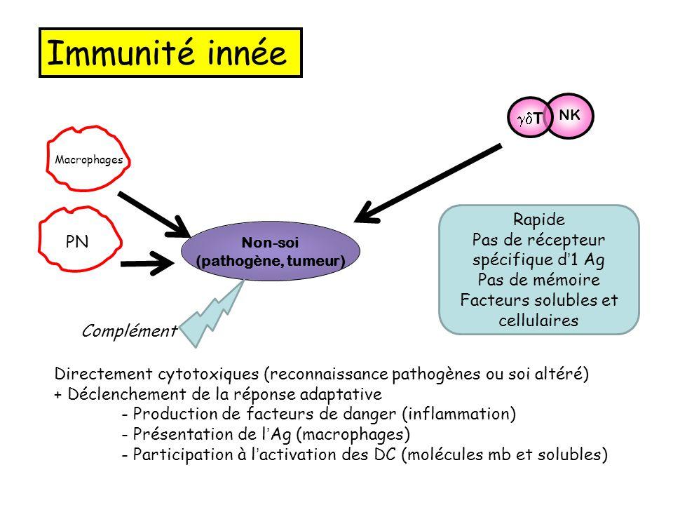 Non-soi (pathogène, tumeur) NK Macrophages  T PN Complément Immunité innée Directement cytotoxiques (reconnaissance pathogènes ou soi altéré) + Décl