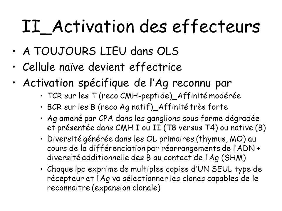 II_Activation des effecteurs Ordre dans l'activation -TCD4 puis TCD8 et B (besoin Th) Met en jeu des contacts cellulaires étroits (synapses): DC/TCD4; DC/TCD8; TCD4/B Met en jeu des cellules stromales (recrutement et migration des lymphocytes, sélection des B) Cette activation s'accompagne d'une différenciation en cellules effectrices –Th1/Th2/Th17/T FH pour l'activation d'autres cellules immunitaires –B mémoires/plasmocytes La différenciation s'accompagne d'une migration dans les tissus cibles