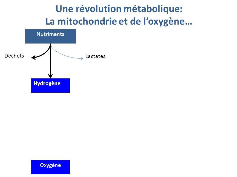 L'oxydation aérobie Nutriments Hydrogène Déchets Lactates Oxygène H2OH2O ATP Travail Transfert d'électrons Production d'ATP au niveau mitochondrie ADP 1 mole de glucose  36 ATP