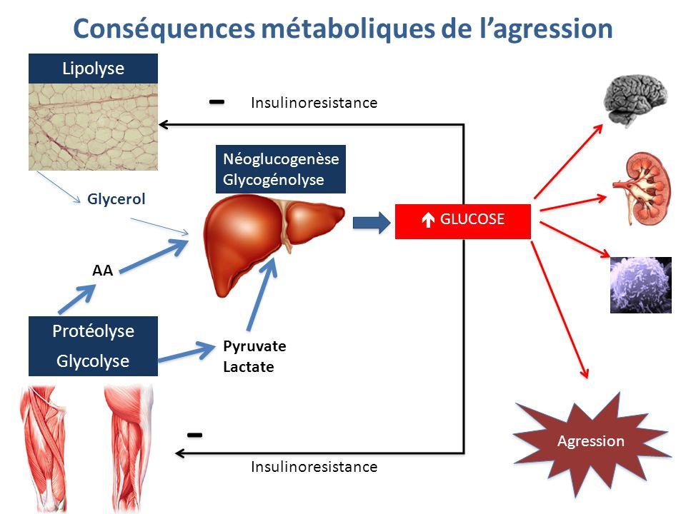 Lipolyse Protéolyse Néoglucogenèse Glycogénolyse Agression Glycerol AA  GLUCOSE Conséquences métaboliques de l'agression Glycolyse Pyruvate Lactate -
