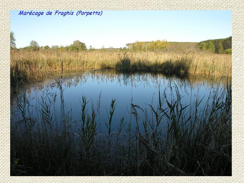 Marécage de Fraghis (Porpetto)