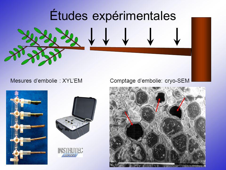 Études expérimentales Comptage d'embolie: cryo-SEMMesures d'embolie : XYL'EM