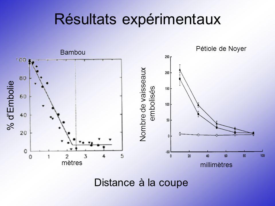 Résultats expérimentaux % d'Embolie Nombre de vaisseaux embolisés Distance à la coupe mètres millimètres Bambou Pétiole de Noyer