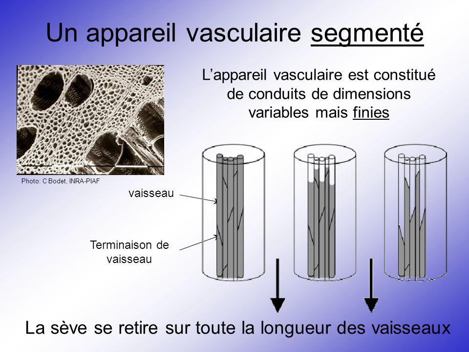 Un appareil vasculaire segmenté Photo: C Bodet, INRA-PIAF L'appareil vasculaire est constitué de conduits de dimensions variables mais finies vaisseau