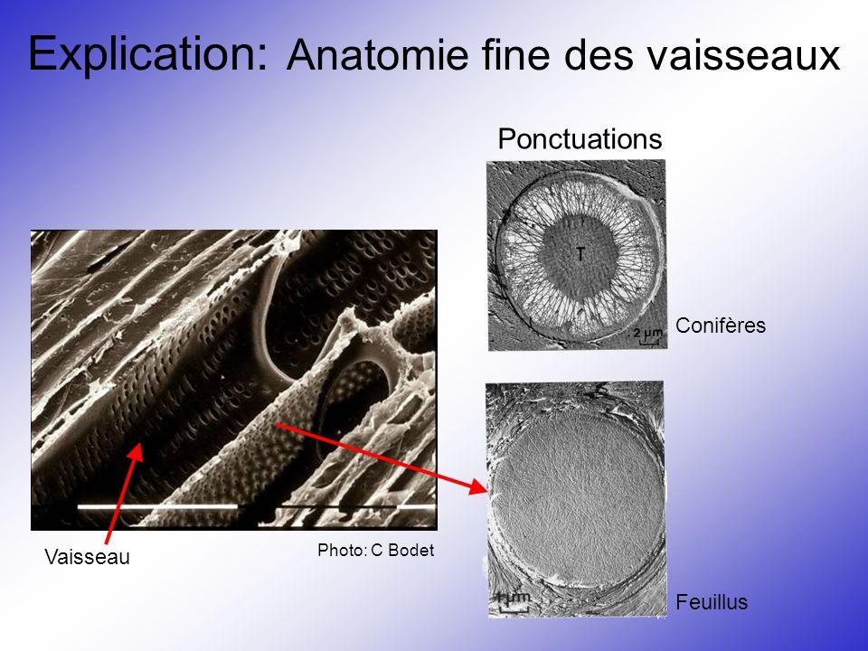 Explication: Anatomie fine des vaisseaux Vaisseau Photo: C Bodet Conifères Feuillus Ponctuations