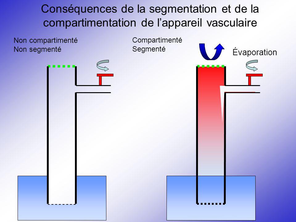 Compartimenté Segmenté Évaporation Conséquences de la segmentation et de la compartimentation de l'appareil vasculaire Non compartimenté Non segmenté