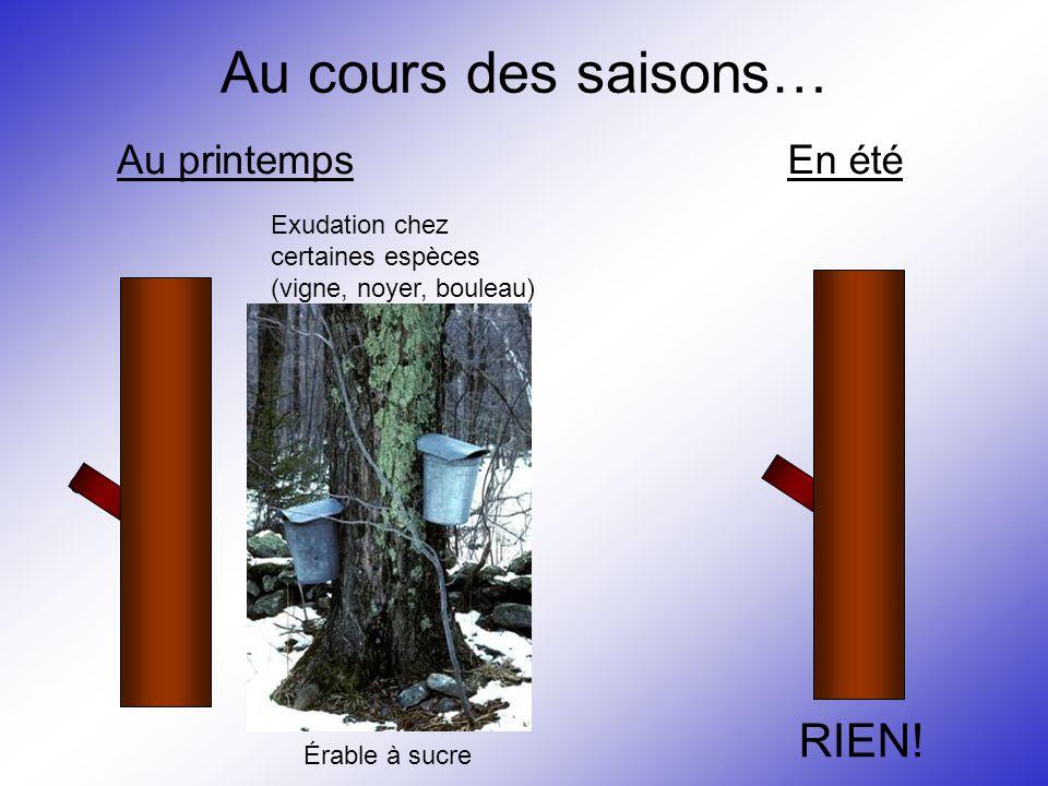 Au cours des saisons… Au printemps Exudation chez certaines espèces (vigne, noyer, bouleau) Érable à sucre En été RIEN!