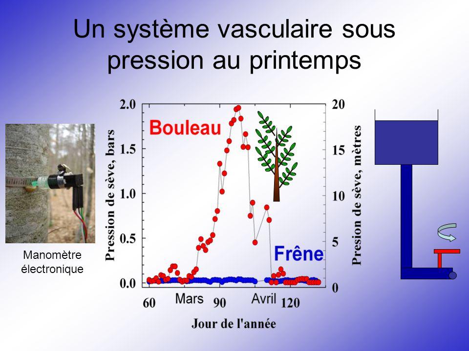 Un système vasculaire sous pression au printemps Manomètre électronique