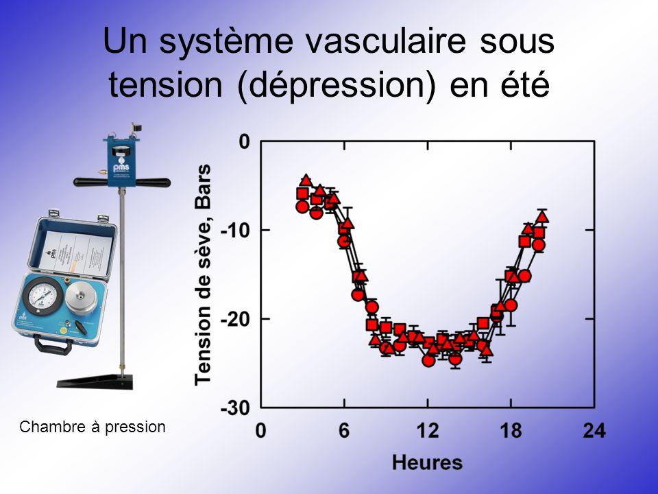 Un système vasculaire sous tension (dépression) en été Chambre à pression