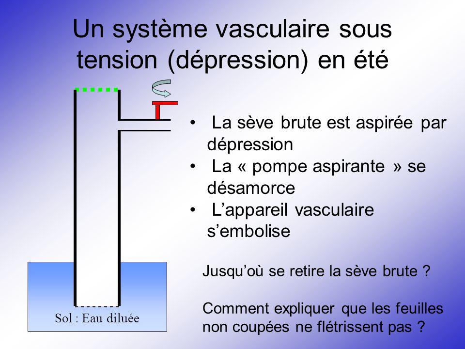 Un système vasculaire sous tension (dépression) en été Sol : Eau diluée La sève brute est aspirée par dépression La « pompe aspirante » se désamorce L