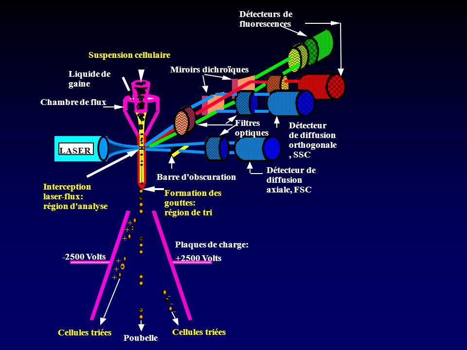 + + + + + + Interception laser-flux: région d'analyse Formation des gouttes: région de tri -2500 Volts +2500 Volts - - - Cellules triées Poubelle Plaq
