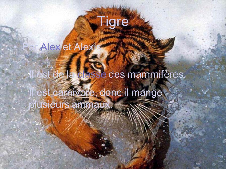 Tigre Par Alex et Alexis Il est de la classe des mammifères.