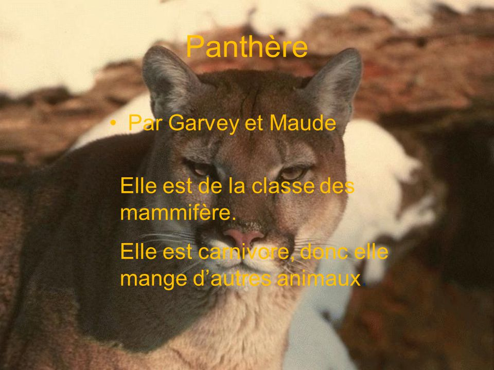 Panthère Par Garvey et Maude Elle est de la classe des mammifère.