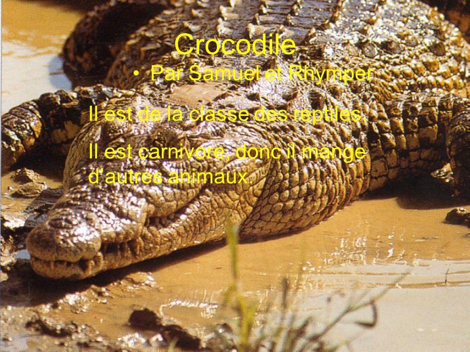 Crocodile Par Samuel et Rhymper Il est de la classe des reptiles.