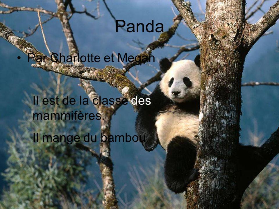 Panda Par Charlotte et Megan Il est de la classe des mammifères. Il mange du bambou.