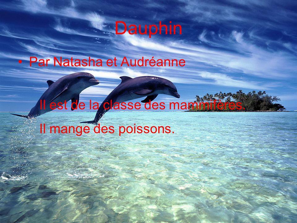 Dauphin Par Natasha et Audréanne Il est de la classe des mammifères. Il mange des poissons.