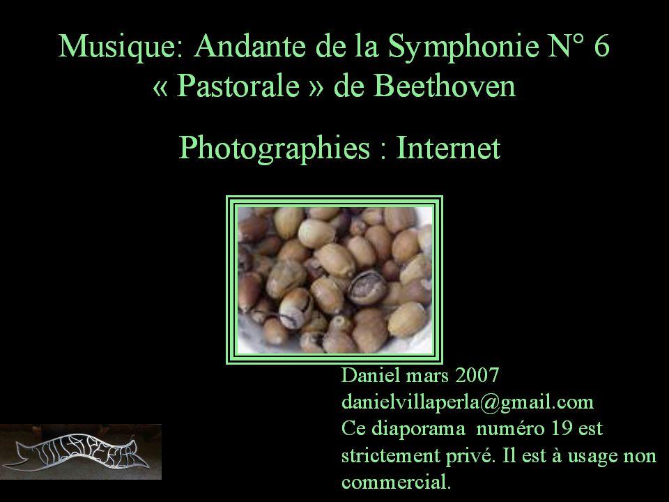 Frédéric BackMusique: Andante de la Symphonie N° 6 « Pastorale » de Beethoven
