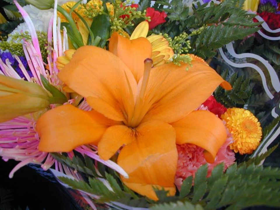 J ai reçu des fleurs aujourd hui et ce n était pas la fête des mères ni un autre jour spécial.