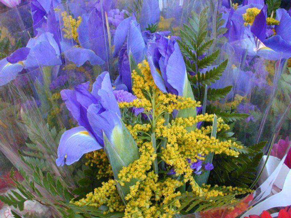Il m'a battue à mort … Si seulement j'avais trouvé assez de courage pour le laisser … je n'aurais pas reçu de fleurs aujourd'hui … J'ai reçu des fleurs ce matin.