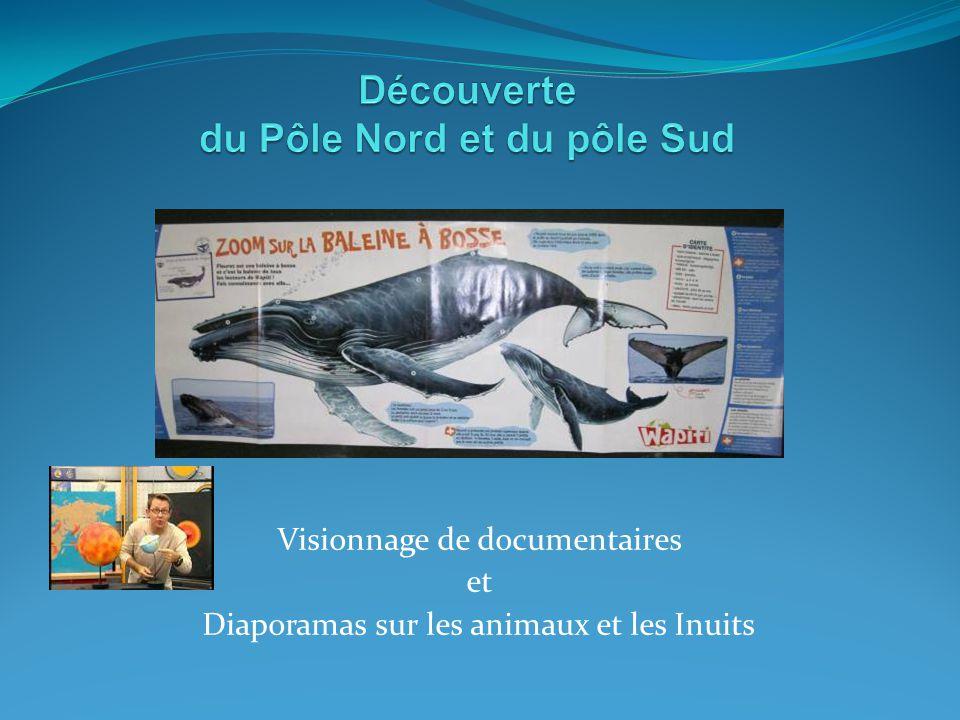 Visionnage de documentaires et Diaporamas sur les animaux et les Inuits