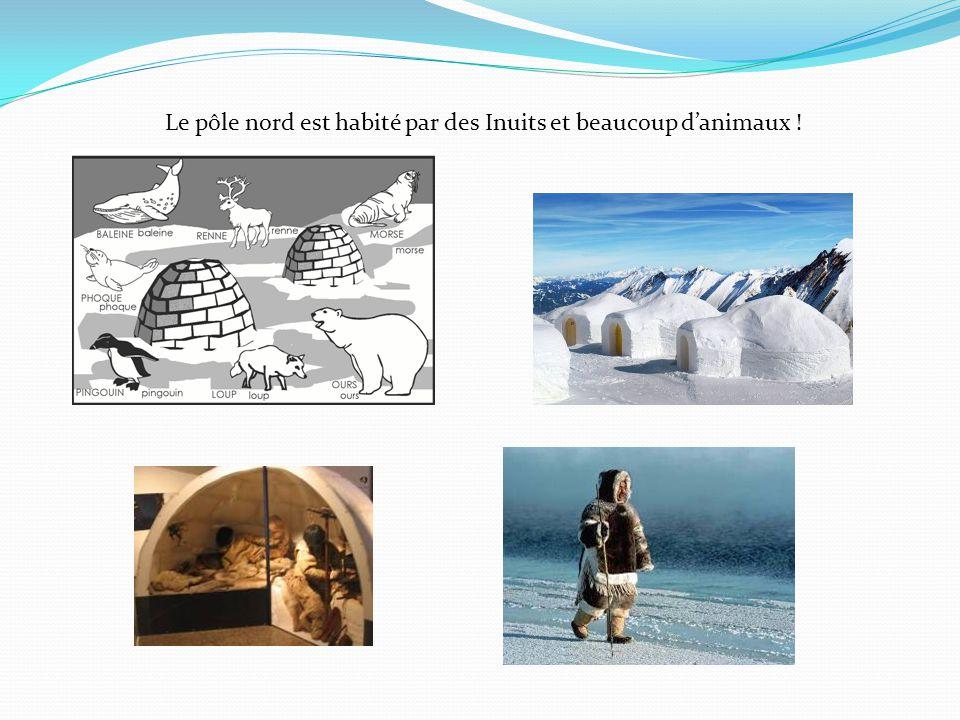 Le pôle nord est habité par des Inuits et beaucoup d'animaux !