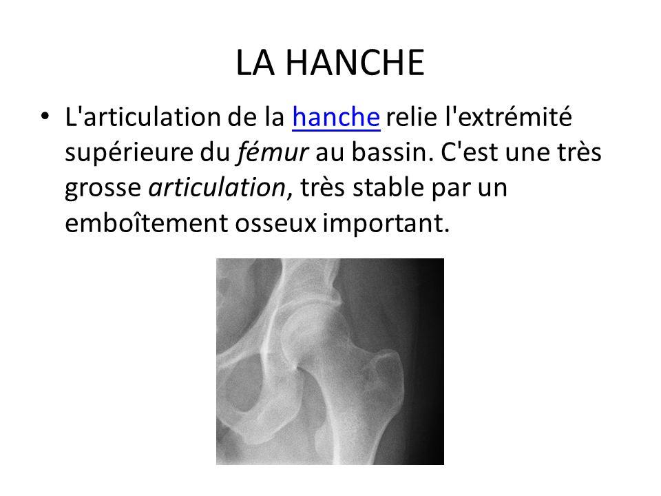 LA HANCHE L'articulation de la hanche relie l'extrémité supérieure du fémur au bassin. C'est une très grosse articulation, très stable par un emboîtem