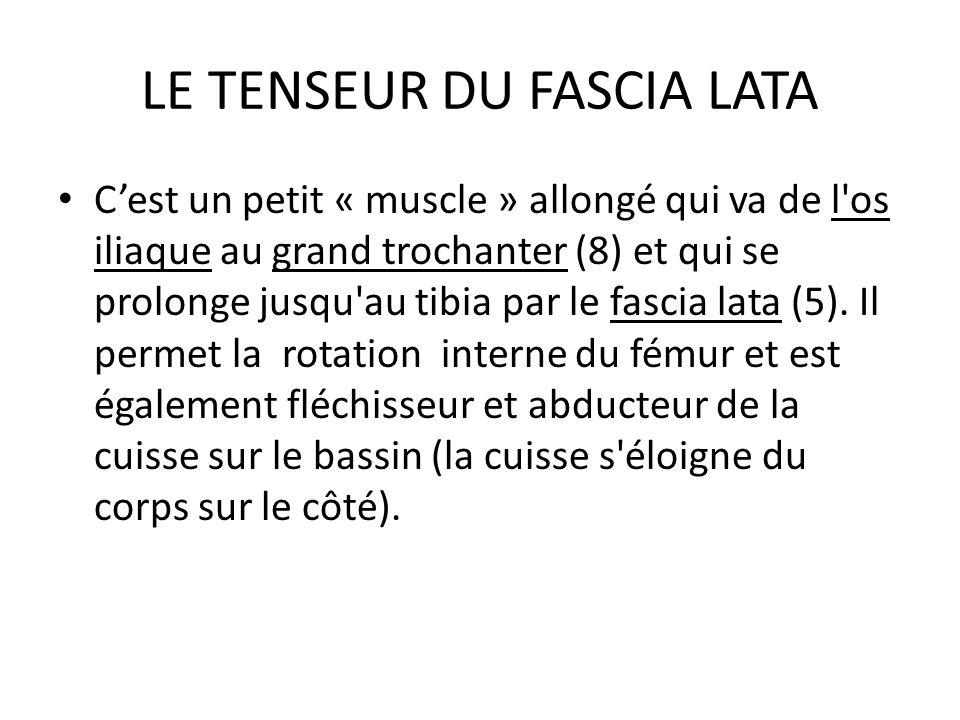 LE TENSEUR DU FASCIA LATA C'est un petit « muscle » allongé qui va de l'os iliaque au grand trochanter (8) et qui se prolonge jusqu'au tibia par le fa