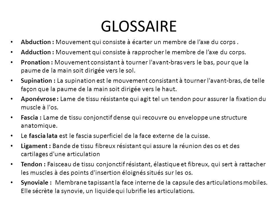 GLOSSAIRE Abduction : Mouvement qui consiste à écarter un membre de l'axe du corps. Adduction : Mouvement qui consiste à rapprocher le membre de l'axe
