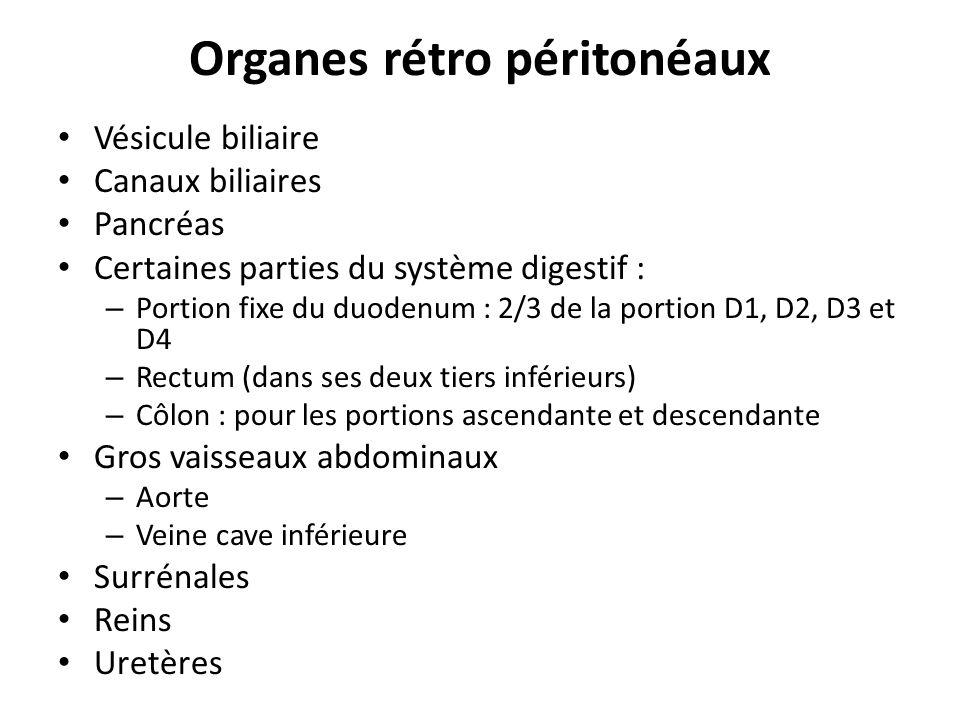 Organes rétro péritonéaux Vésicule biliaire Canaux biliaires Pancréas Certaines parties du système digestif : – Portion fixe du duodenum : 2/3 de la p