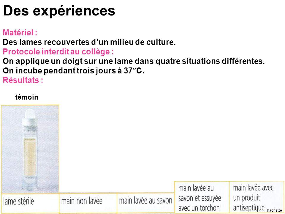 hachette Des expériences Matériel : Des lames recouvertes d'un milieu de culture.