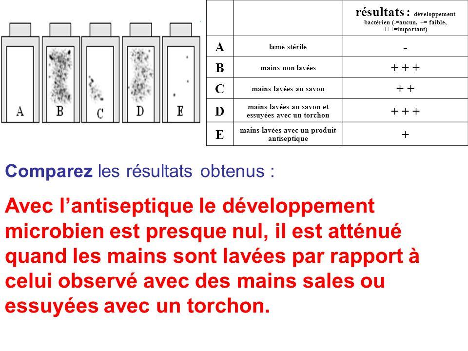 résultats : développement bactérien (-=aucun, += faible, +++=important) A lame stérile - B mains non lavées + + + C mains lavées au savon + D mains lavées au savon et essuyées avec un torchon + + + E mains lavées avec un produit antiseptique + Comparez les résultats obtenus : Avec l'antiseptique le développement microbien est presque nul, il est atténué quand les mains sont lavées par rapport à celui observé avec des mains sales ou essuyées avec un torchon.
