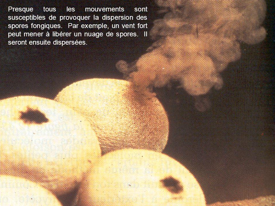 Presque tous les mouvements sont susceptibles de provoquer la dispersion des spores fongiques. Par exemple, un vent fort peut mener à libérer un nuage