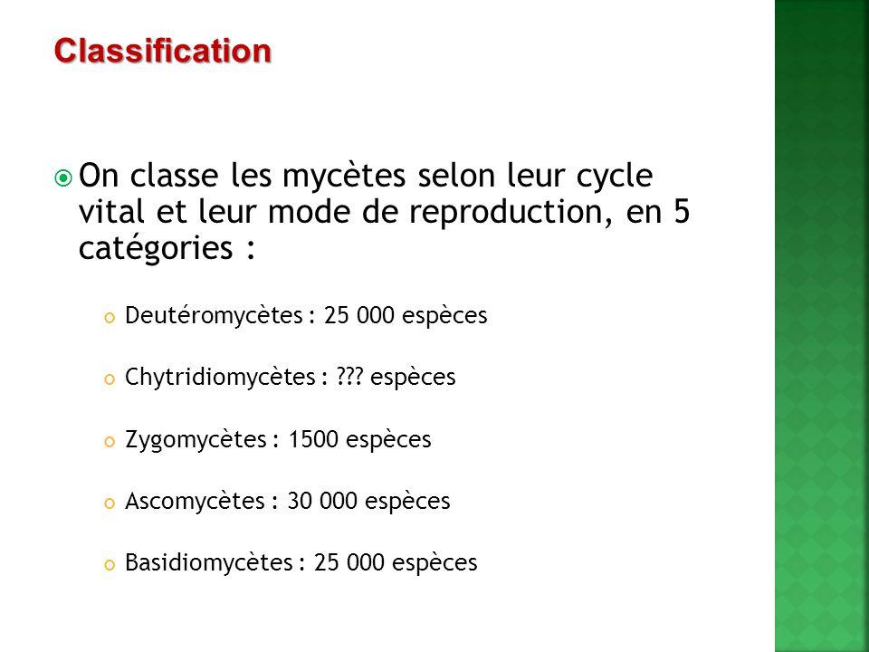  On classe les mycètes selon leur cycle vital et leur mode de reproduction, en 5 catégories : Deutéromycètes : 25 000 espèces Chytridiomycètes : ???