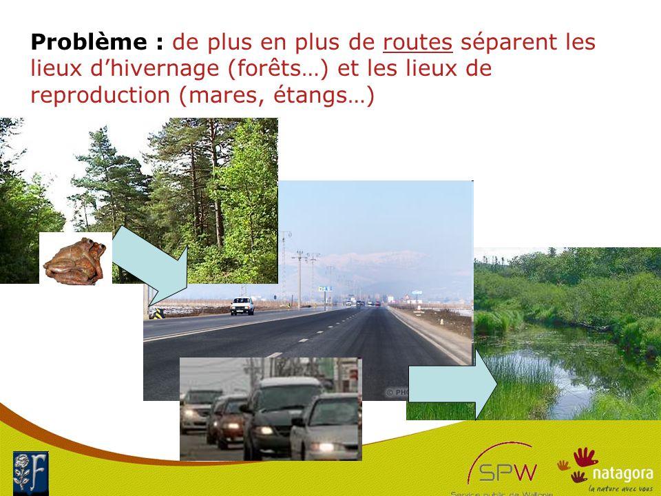 17 Problème : de plus en plus de routes séparent les lieux d'hivernage (forêts…) et les lieux de reproduction (mares, étangs…)