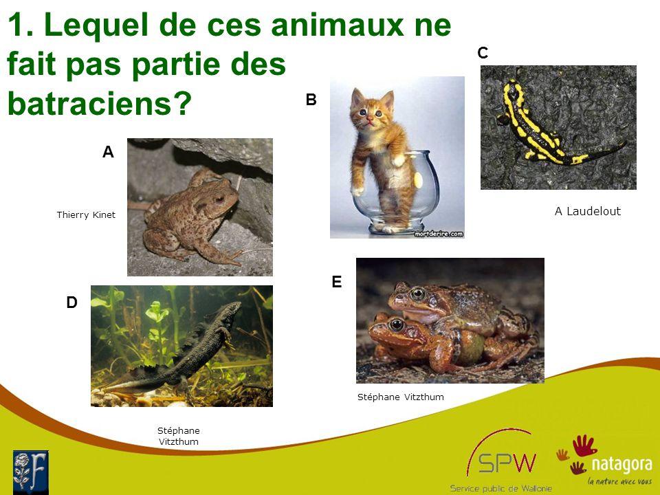 1. Lequel de ces animaux ne fait pas partie des batraciens.