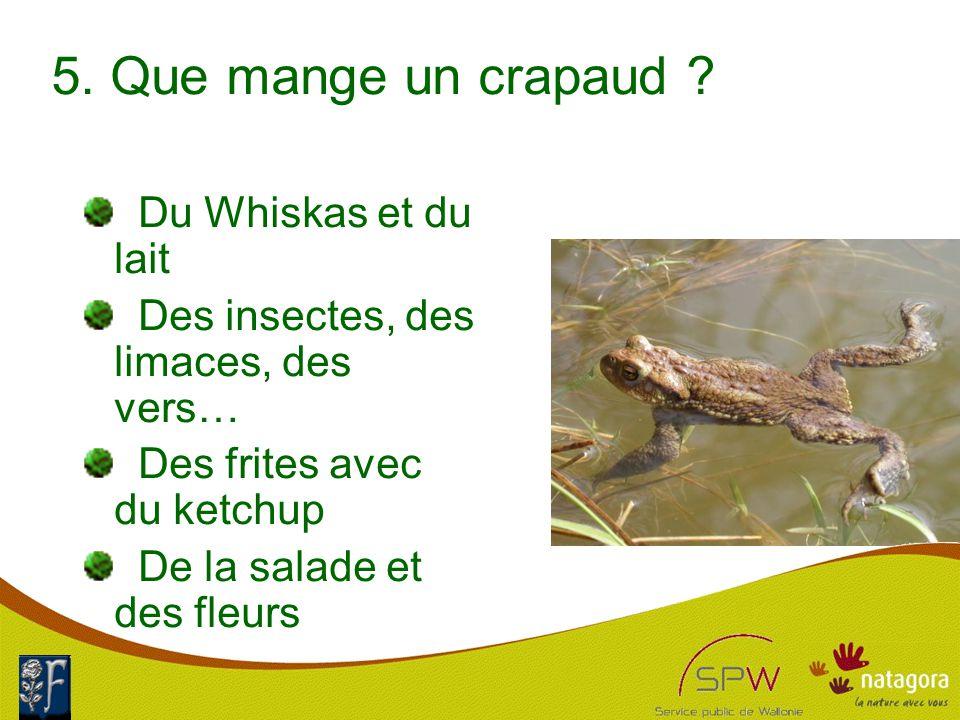 6.Quelles sortes de grenouilles peut-on rencontrer chez nous .