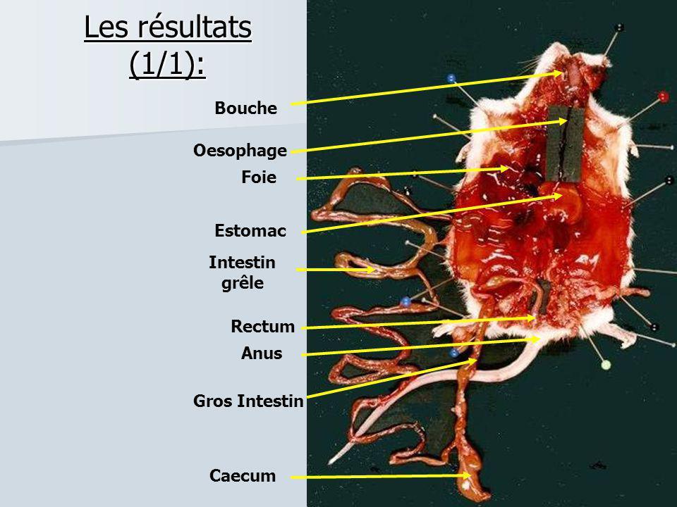 Les résultats (1/1): Bouche Oesophage Foie Estomac Intestin grêle Anus Rectum Gros Intestin Caecum