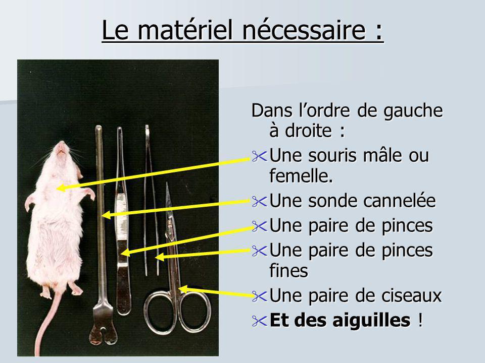 Le matériel nécessaire : Dans l'ordre de gauche à droite :  Une souris mâle ou femelle.  Une sonde cannelée  Une paire de pinces  Une paire de pin