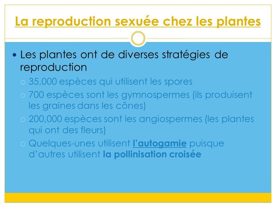 La reproduction sexuée chez les plantes Les plantes ont de diverses stratégies de reproduction  35,000 espèces qui utilisent les spores  700 espèces sont les gymnospermes (ils produisent les graines dans les cônes)  200,000 espèces sont les angiospermes (les plantes qui ont des fleurs)  Quelques-unes utilisent l'autogamie puisque d'autres utilisent la pollinisation croisée