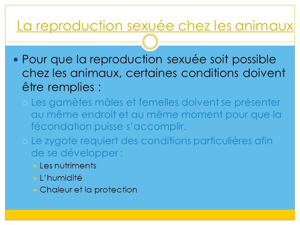 La reproduction sexuée chez les animaux Pour que la reproduction sexuée soit possible chez les animaux, certaines conditions doivent être remplies :  Les gamètes mâles et femelles doivent se présenter au même endroit et au même moment pour que la fécondation puisse s'accomplir.