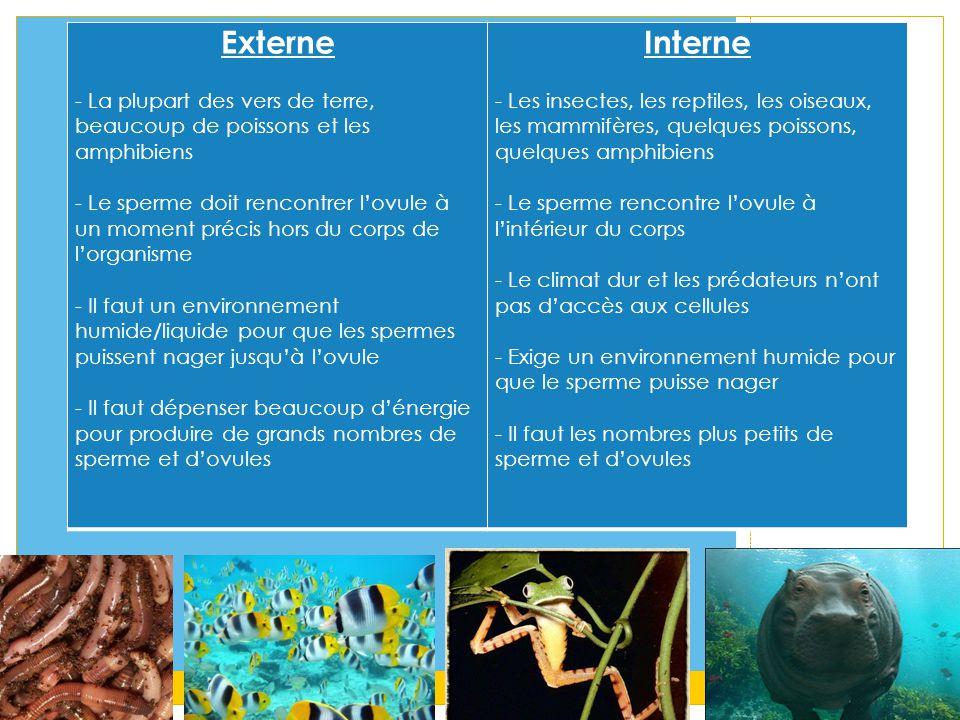 Externe - La plupart des vers de terre, beaucoup de poissons et les amphibiens - Le sperme doit rencontrer l'ovule à un moment précis hors du corps de l'organisme - Il faut un environnement humide/liquide pour que les spermes puissent nager jusqu'à l'ovule - Il faut dépenser beaucoup d'énergie pour produire de grands nombres de sperme et d'ovules Interne - Les insectes, les reptiles, les oiseaux, les mammifères, quelques poissons, quelques amphibiens - Le sperme rencontre l'ovule à l'intérieur du corps - Le climat dur et les prédateurs n'ont pas d'accès aux cellules - Exige un environnement humide pour que le sperme puisse nager - Il faut les nombres plus petits de sperme et d'ovules